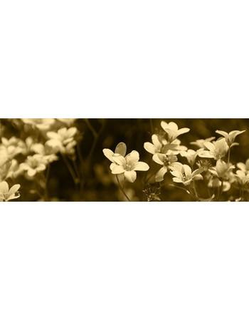 Ładne kwiaty w sepii