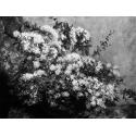 Reprodukcje obrazów Spring Flowers - Gustave Courbet