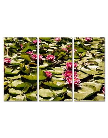 Lilie wodne na listkach