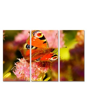 Pomarańczowy motyl na kwiatach