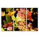 Dwa motyle na kwiatkach