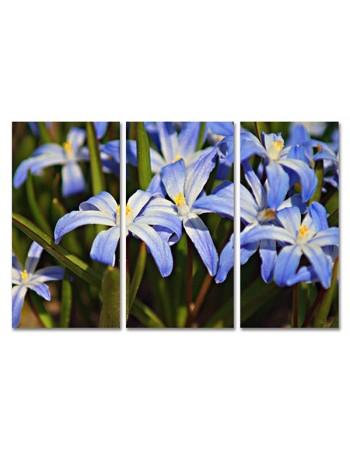 Kolorowe Kwiaty
