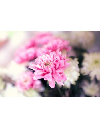 Ładny różowy kwiat