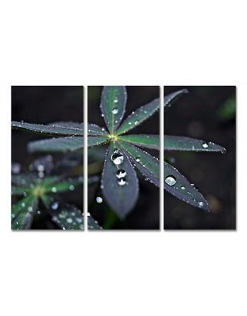 Krople rosy na roślinie