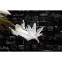 Biały kwitnący kwiat
