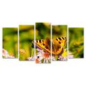 Kolorowy motyl na kwiatku