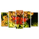 Motylek na kwiatku