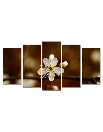 Kwitnący kwiat w Sepii