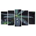 Krople wody po deszczu