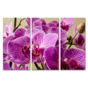 Ładna Orchidea
