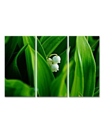Ukrywający się kwiat
