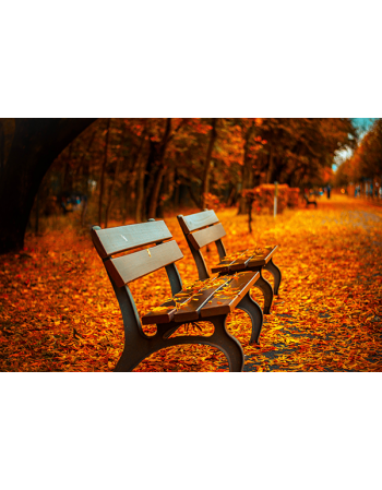 Ławka wśród jesiennych liści