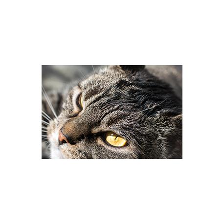 Piękny Kot