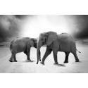 Dzikie Słonie