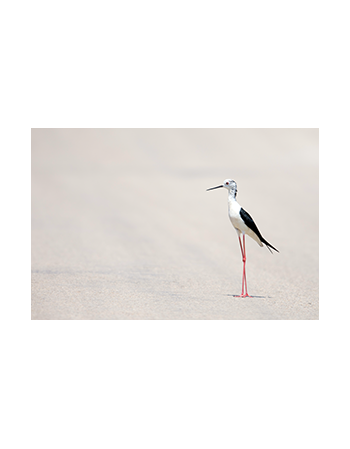 Ptak na plaży