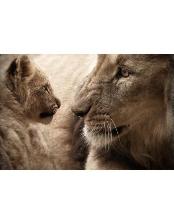 Rodzina lwów