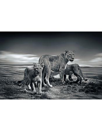 Dzikie Lwy