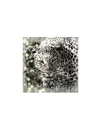 Dziki Lampard