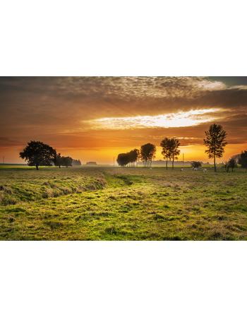 Zachód Słońca na polanie