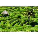 Roślinny labirynt