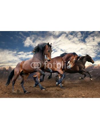 Konie bięgnące po pustyni