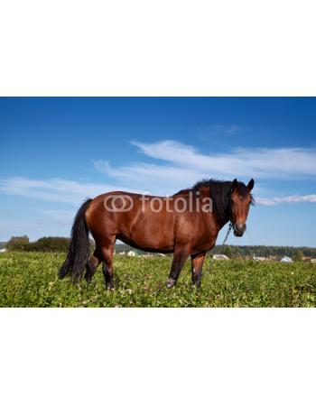 Koń na polanie