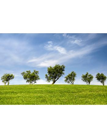 Drzewa na łące