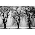Trzy drzewa w czerni i bieli