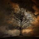 Drzewo w chmurach