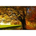 Polna droga w kolorach jesieni