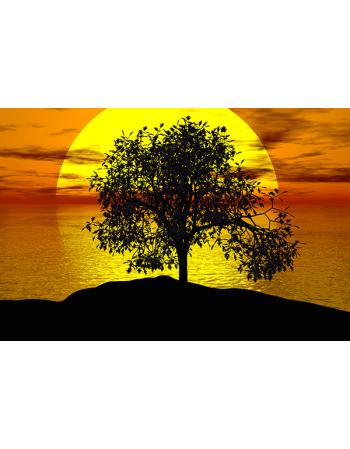 Drzewo w tle z zachodem Słonca