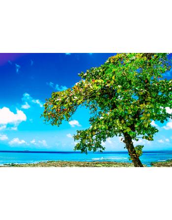 Drzewo na tropikalnej plaży