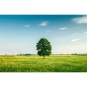 Piękne drzewo na polanie