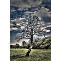 Drzewo na tle zachmurzonego nieba HDR