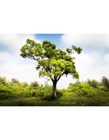 Zielone drzewko