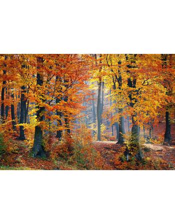 Las w jesieni