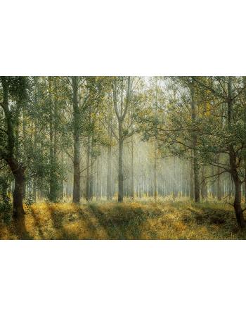 Las o wschodzie Słońca