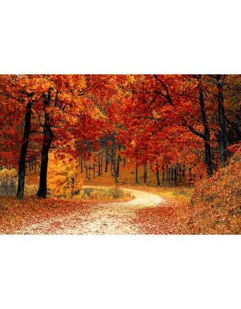 Polna droga w lesie