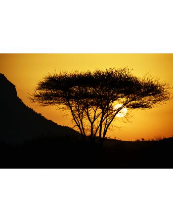 Piękny drzewo o zachodzie słońca