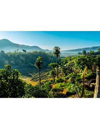 Tropikalne drzewa