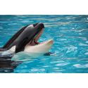Pływający Delfin
