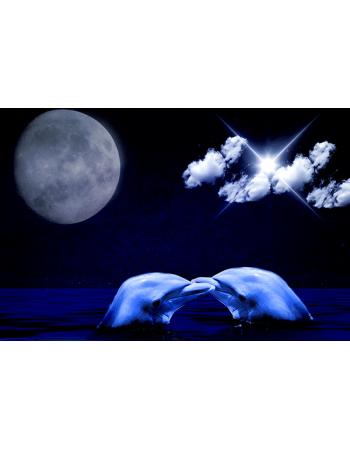 Delfiny nocą