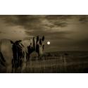 Koń wieczorową porą