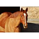 Ładny Koń