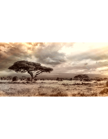 Obraz na płótnie Afrykańskie drzewo