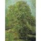 Reprodukcje obrazów Vincent van Gogh Blossoming Chestnut Tree