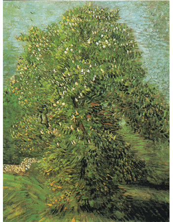 Reprodukcje obrazów Vincent van Gogh Blossoming Chestnut Tree