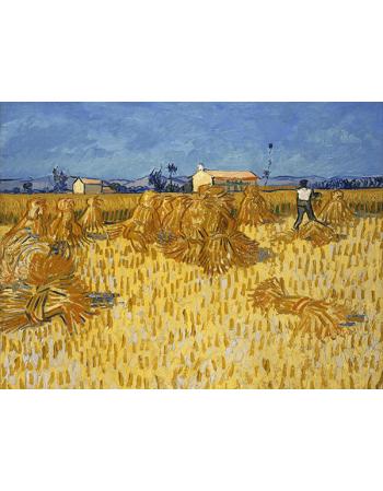 Reprodukcje obrazów Vincent van Gogh Corn Harvest in Provence