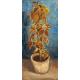 Reprodukcje obrazów Vincent van Gogh Flame Nettle in a Flowerpot