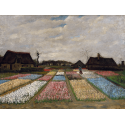 Reprodukcje obrazów Flower Beds in Holland - Vincent van Gogh